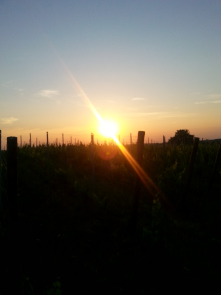 Sunset over the vineyards of Monestier
