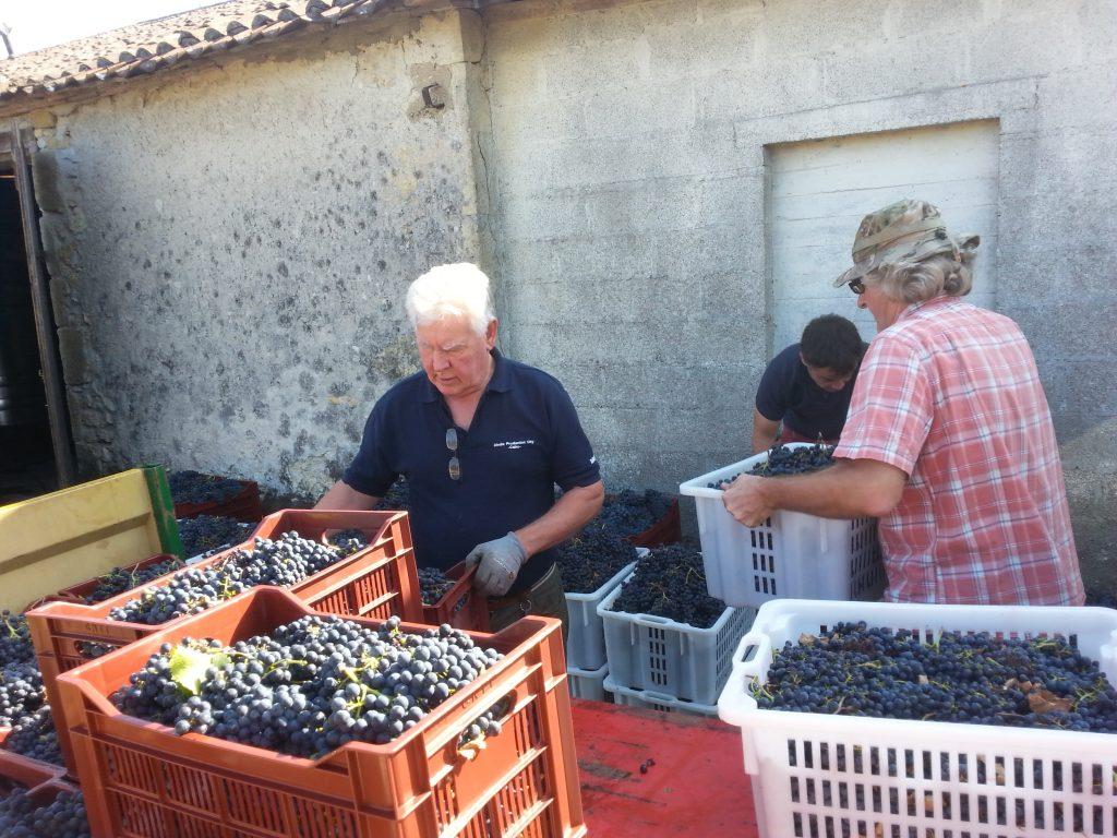 Grape loading